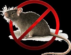 derattizzazioni-stop_ratto