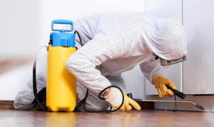 impresa-pulizie-bonifica-disinfestazione-derattizzazione